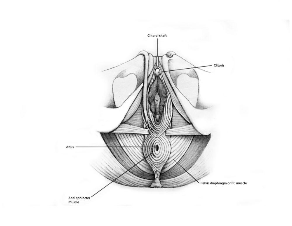 Sexual Anatomy
